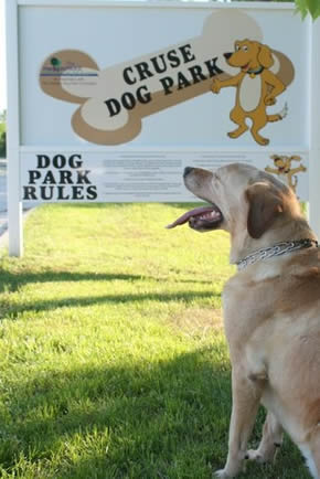 Golden Retriever Reading a Sign