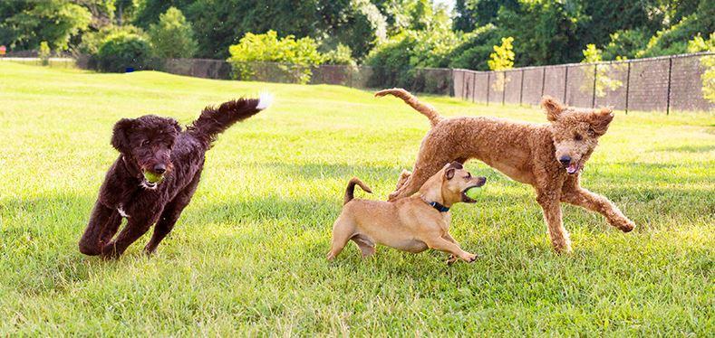 Cruse Dog Park | Springfield-Greene County Park Board